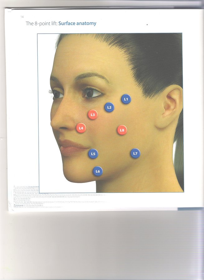 Face Surface Anatomy Images Human Body Anatomy