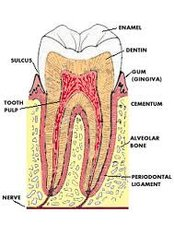 Molar Root Canal - Cosmetic Dentist in Nuevo Progreso Dental Artistry