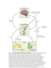 Andropause Hormone Treatment - Balance My Hormones