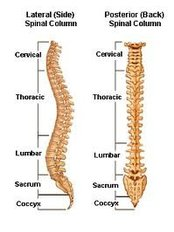 Spinal Fusion - Isomer