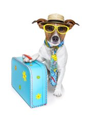 Hull Travel Clinic - Travel Dog